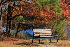 偏僻的长凳 免版税库存照片