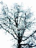 偏僻的雪树 免版税库存照片