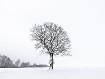 偏僻的结构树冬天 免版税库存照片