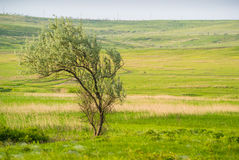 偏僻的结构树在草甸 免版税库存图片