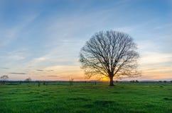 偏僻的结构树 库存照片
