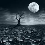偏僻的死的树在满月晚上在剧烈的多云天空下 免版税库存照片