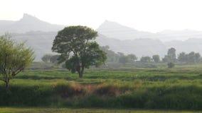 偏僻的Dhrek树 免版税库存照片