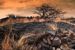 偏僻的treeat日落 大海岛 夏威夷 免版税图库摄影