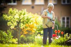 做一些的资深妇女从事园艺在她可爱的庭院里 免版税库存照片