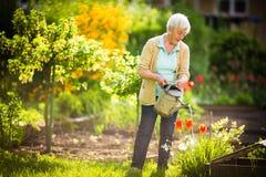 做一些的资深妇女从事园艺在她可爱的庭院里 免版税图库摄影
