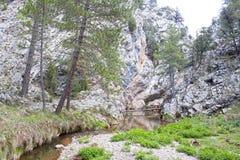 做一座桥梁的树干在河 免版税库存图片