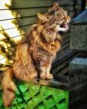做一张滑稽的面孔的猫 免版税库存图片
