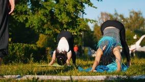 做与教练的两年轻女人瑜伽锻炼在公园-一名妇女有长的蓝色dreadlocks 影视素材
