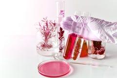 做与污染的科学家研究沾染植物,提取危险解答物质的化学家从毒树 图库摄影