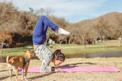 做在一个湖的岸的妇女瑜伽有狗的 免版税库存图片