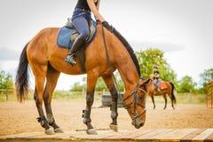 做在乡下草甸的骑师女孩马骑术 免版税库存图片