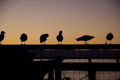 做在剪影的六只鸟不同的姿势站立在镭 库存照片