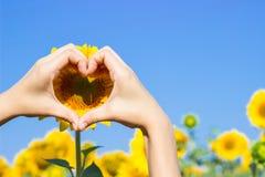 做在向日葵的领域的手心脏标志 图库摄影