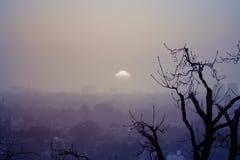 做在树风景的伦敦有雾的日落对比 库存照片