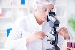 做在labora的女性科学家研究员一次试验 库存照片