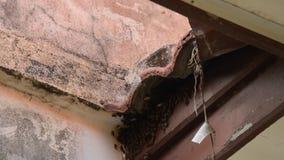 做巢的蜂在瓦屋顶孔下在家 影视素材