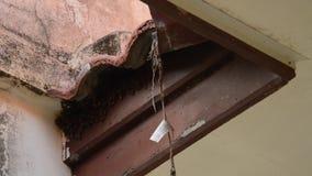 做巢的蜂在瓦屋顶孔下在家 股票视频