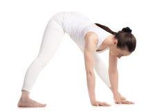 做常设跨骑的信奉瑜伽者女性今后弯曲 库存照片