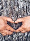 做心脏标志的手在树 免版税图库摄影