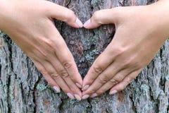 做心脏的女性手在树干的背景塑造 免版税库存照片