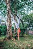 做手倒立瑜伽锻炼的运动的年轻女人倾斜在树 免版税库存照片