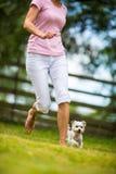 做敏捷性钻子的逗人喜爱的小犬座 免版税图库摄影