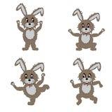 做早晨锻炼的一个滑稽的野兔 图库摄影
