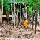做每日清洁惯例的修士在老虎寺庙在北碧,泰国 免版税库存图片