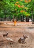 做每日清洁惯例的修士在老虎寺庙在北碧,泰国 免版税库存照片