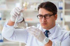 做水质测试污秽expe的年轻研究员科学家 免版税库存照片