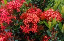 做灌木的红色小花 免版税库存图片