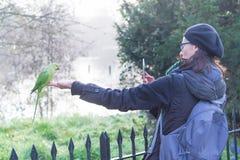 做照片的妇女一只绿色长尾小鹦鹉在海德公园在伦敦在一个晴天 免版税库存图片