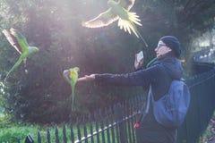 做照片的妇女一只绿色长尾小鹦鹉在海德公园在伦敦在一个晴天 免版税图库摄影