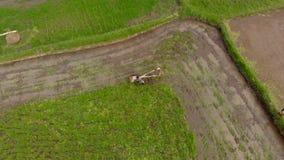 做犁与的农夫空中射击它的领域为米种植园做准备 股票录像