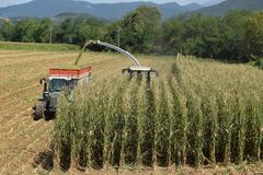 做生物气体的麦子的击碎和渗浸在布雷西亚 免版税库存照片
