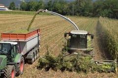 做生物气体的麦子的击碎和渗浸在布雷西亚 库存图片