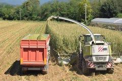 做生物气体的麦子的击碎和渗浸在布雷西亚 免版税库存图片