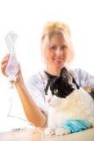 做疗法的微笑的兽医妇女对猫 库存照片