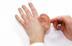 做的最终产品人为人的耳朵硅树脂 图库摄影