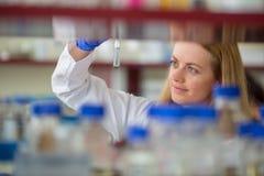 做研究的一位女性研究员的画象对实验室 库存照片