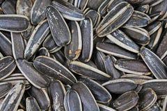 09 20做种子主题向日葵年 作为背景的向日葵种子纹理 黑白烤有机种子 食物摄影在演播室 免版税图库摄影