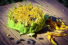 09 20做种子主题向日葵年 库存照片