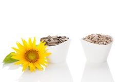 09 20做种子主题向日葵年 免版税库存照片
