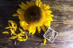 09 20做种子主题向日葵年 免版税图库摄影