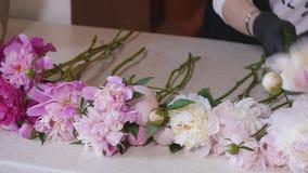 做花束的专业卖花人开始桃红色和白色牡丹 库存图片