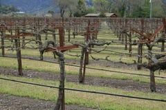 做葡萄园酒的商业 免版税库存图片