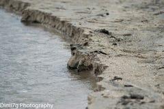 做道路的河通往湖 免版税库存图片