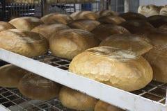做面包 图库摄影