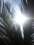 做他们的方式的光线由叶子 免版税库存照片